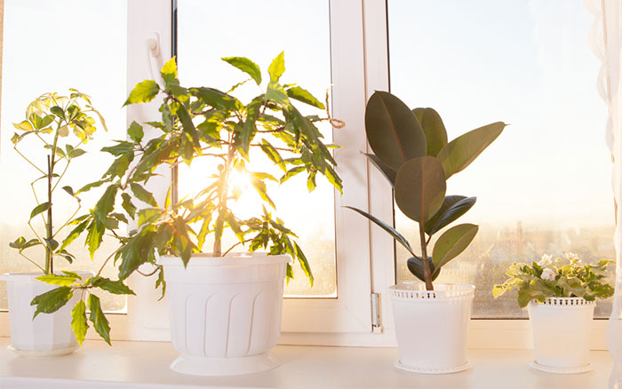 Indoor-plants-that-promotes-clean-air